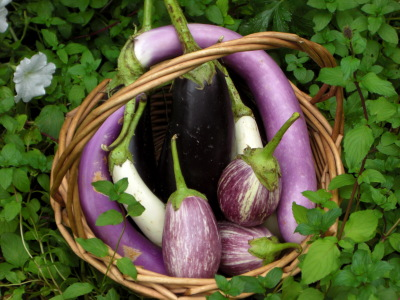 eggplant in basket